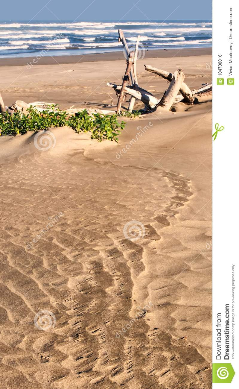 Sandy beach with drift wood and plants