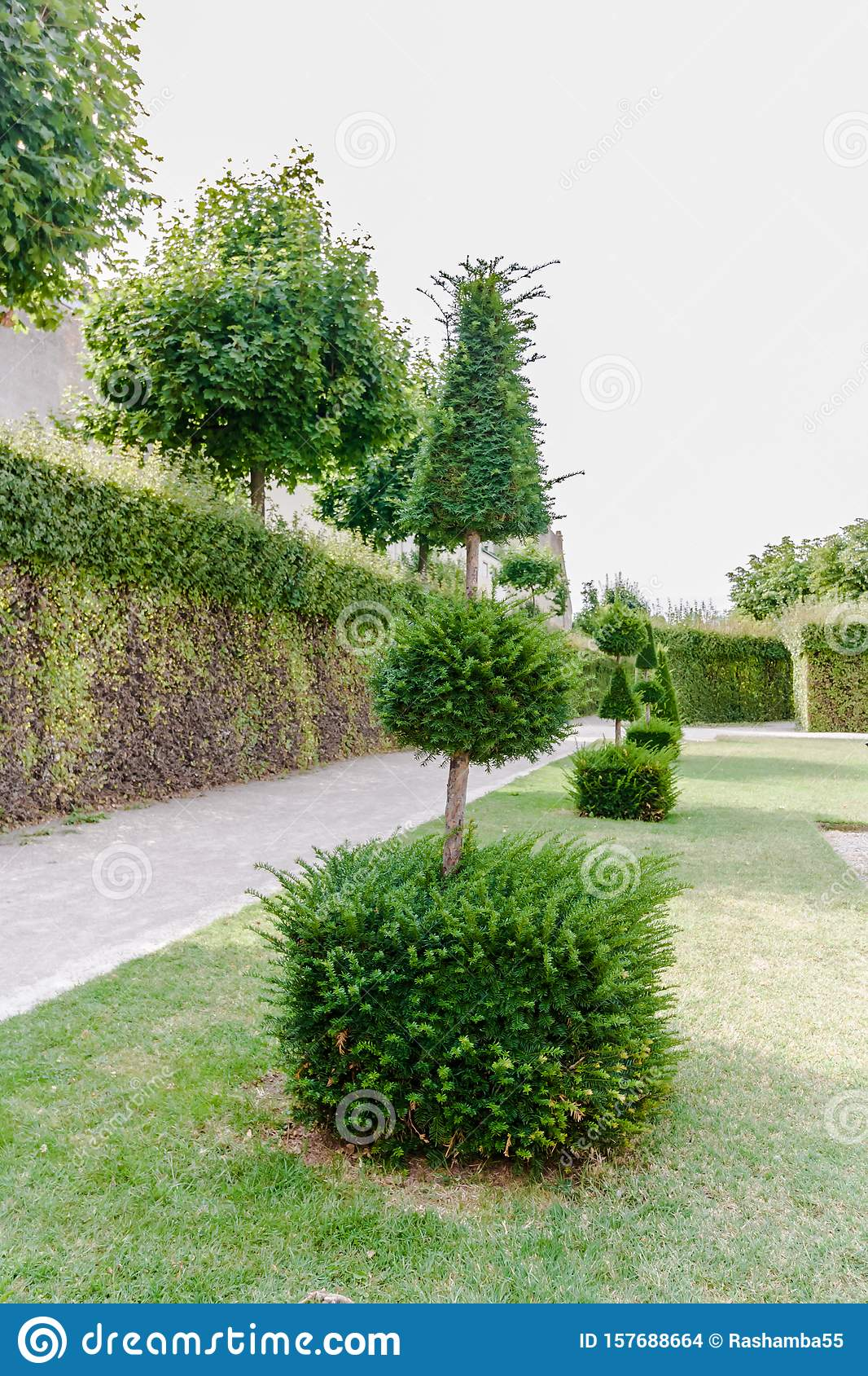 Geometric Plant Forms Of Landscape Design Trees Trimmed As Geometric Shapes Beautiful Garden Topiary Art Landscape Stock Photo Image Of Garden Growth 157688664