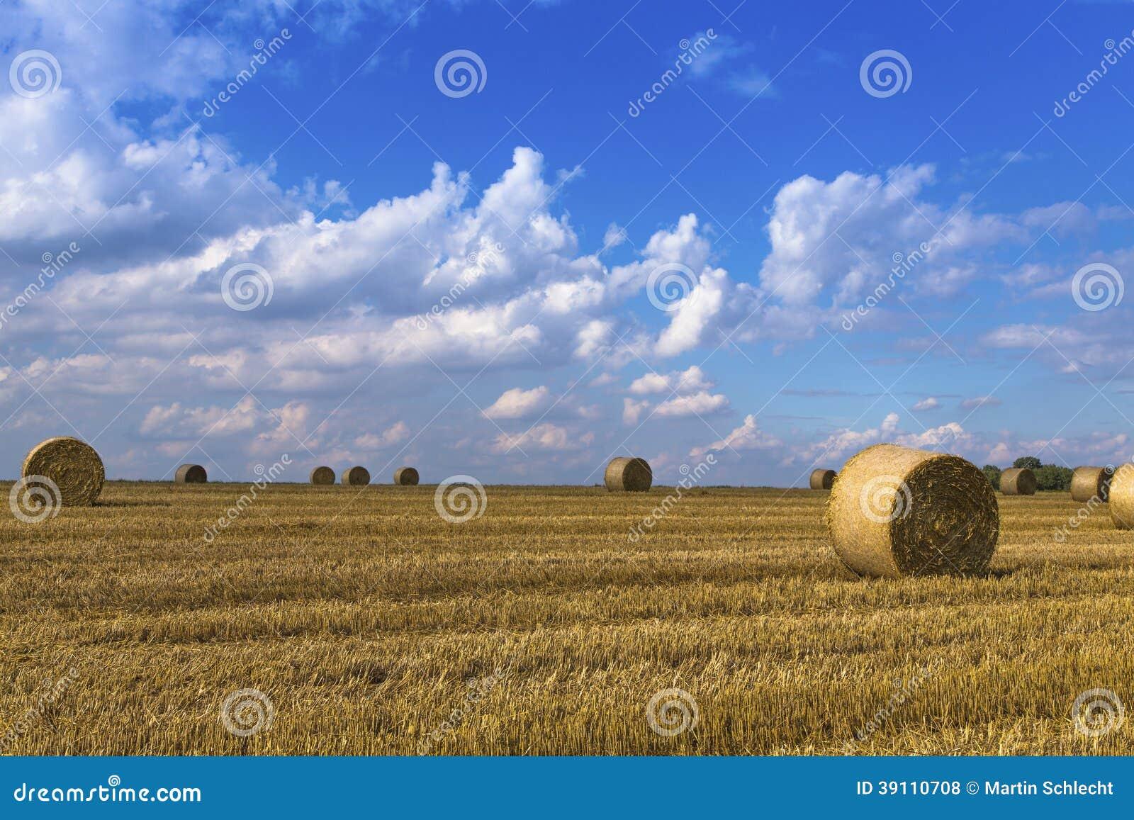 Geoogst gewassengebied