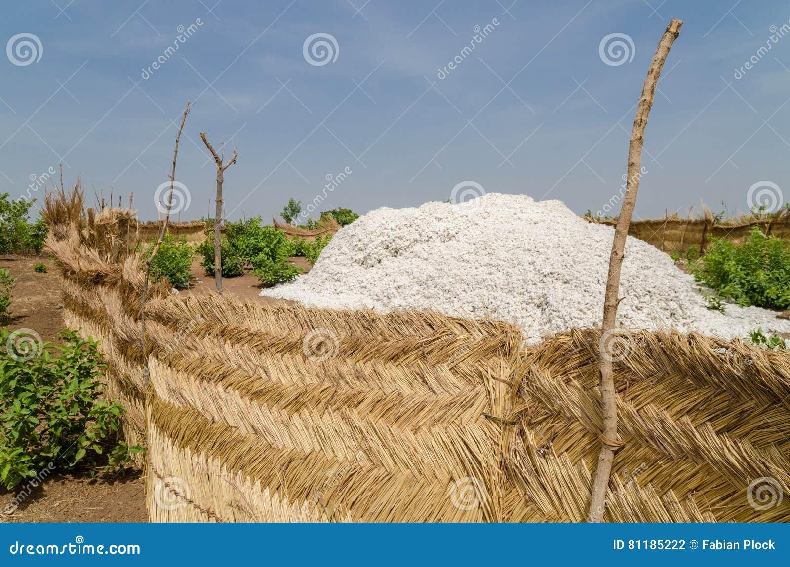 Geoogst katoen die omhoog in traditionele rietstockage onder de blauwe Afrikaanse hemel in Benin worden opgestapeld