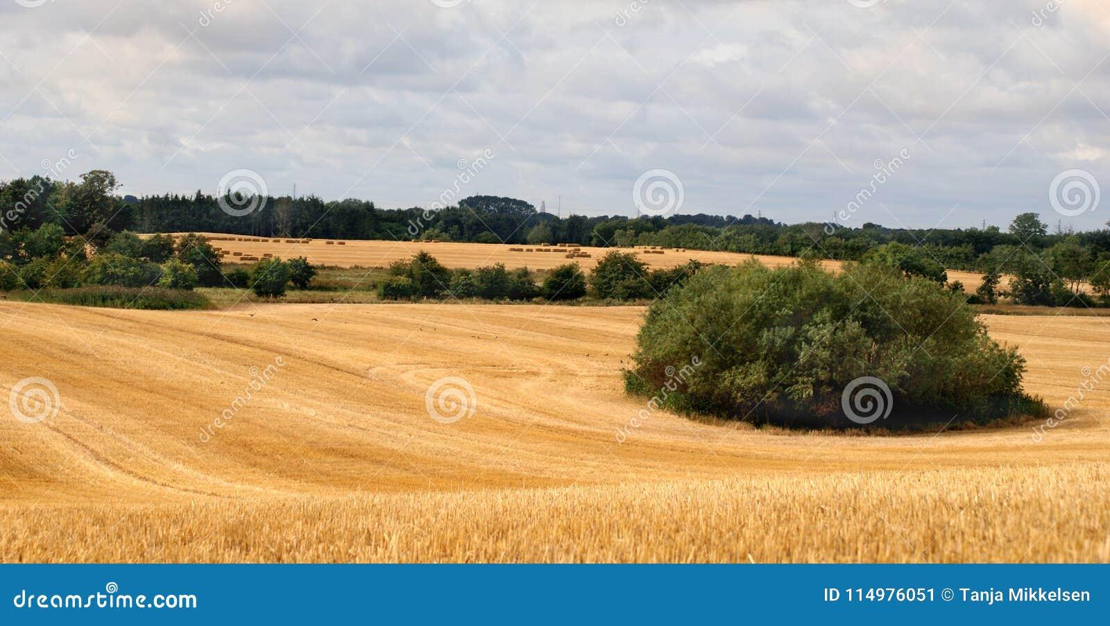 Geoogste gebied en bomen