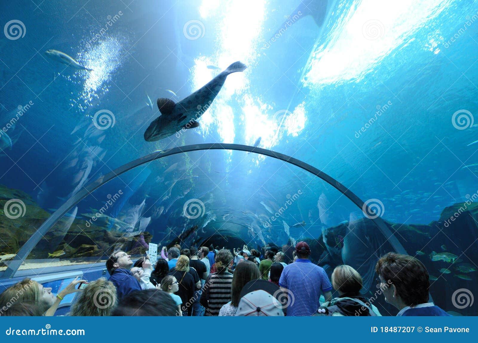 Georgia Aquarium Tunnel Editorial Photography Image