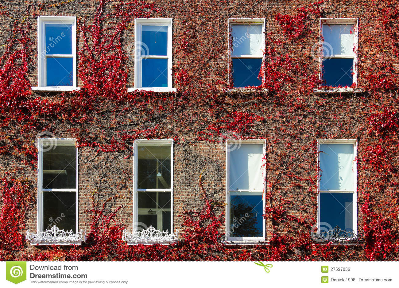 Georgische vensters die door klimop. Dublin.Ireland worden omringd