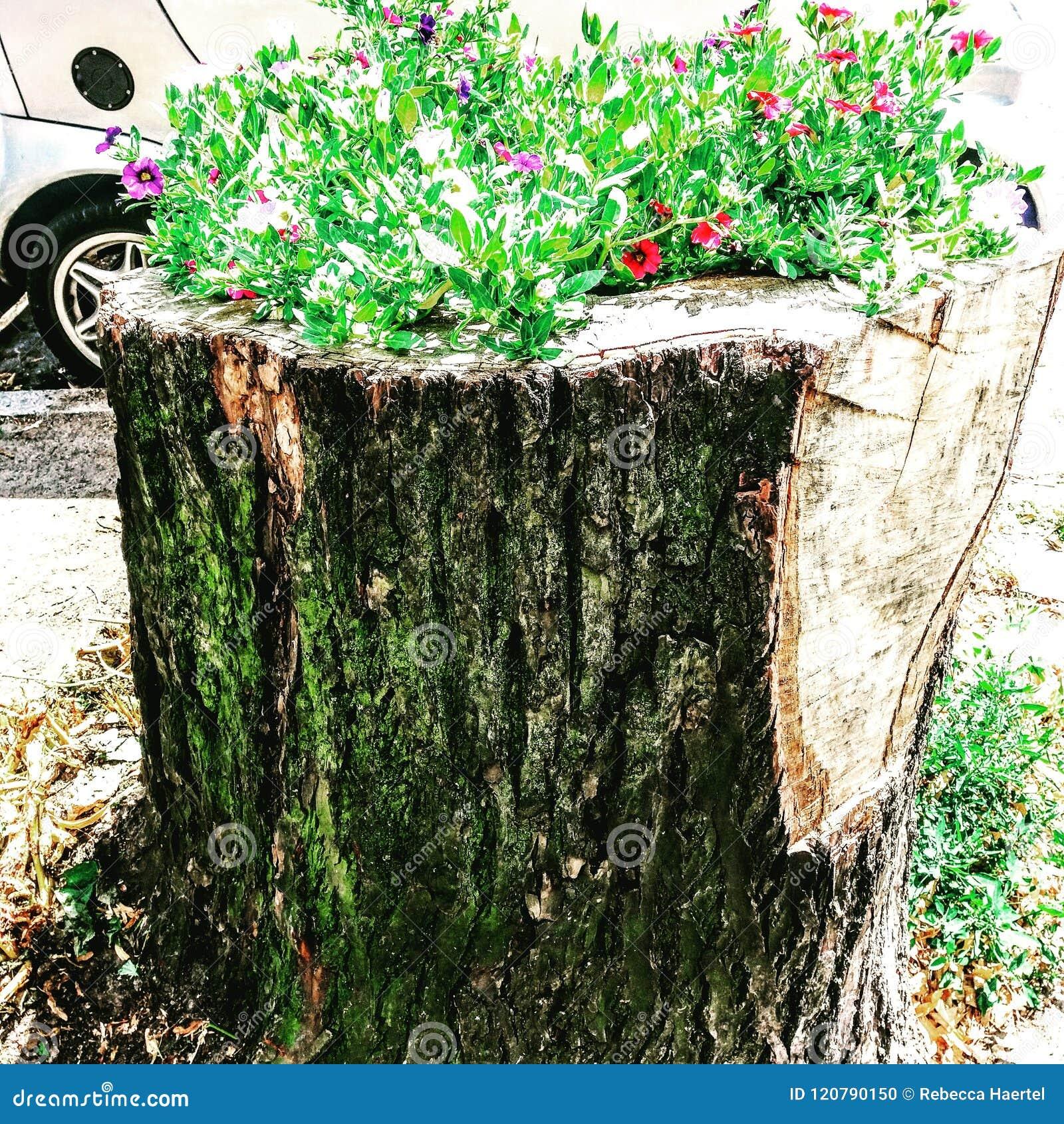 Gepflanzter Baum-Stamm