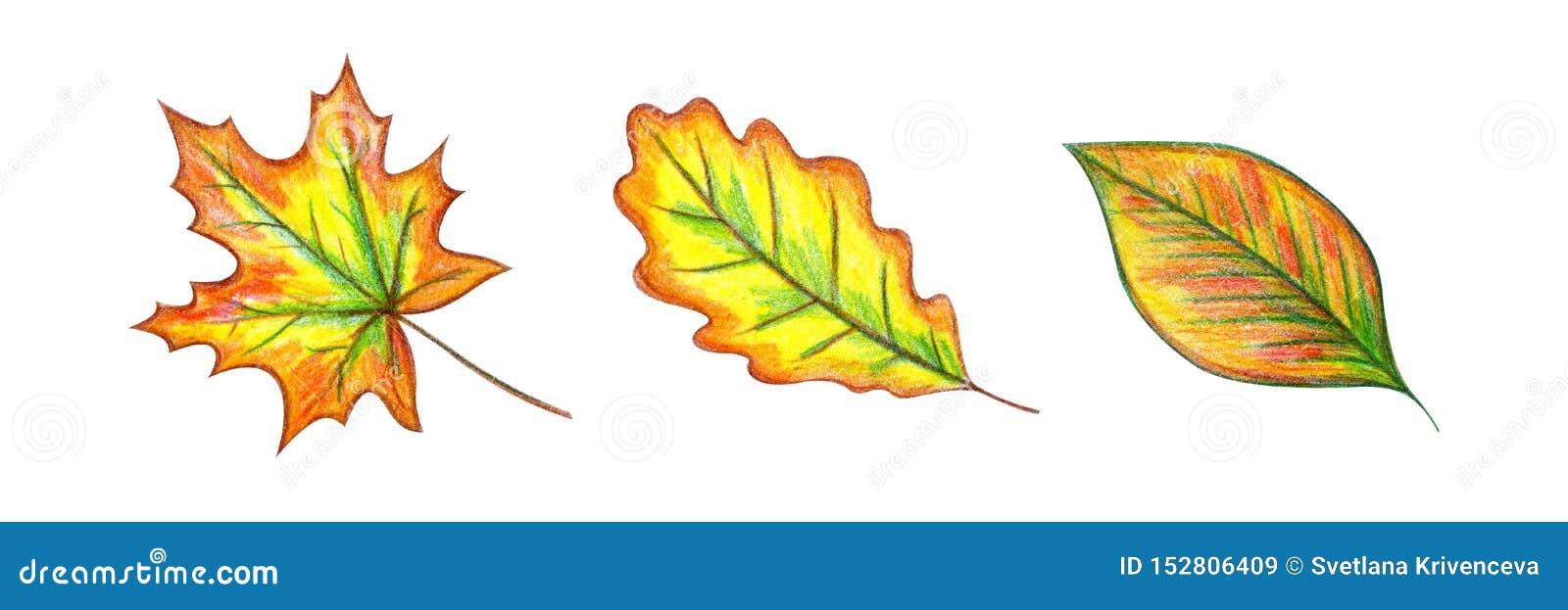 Geplaatste de Bladeren van de herfst