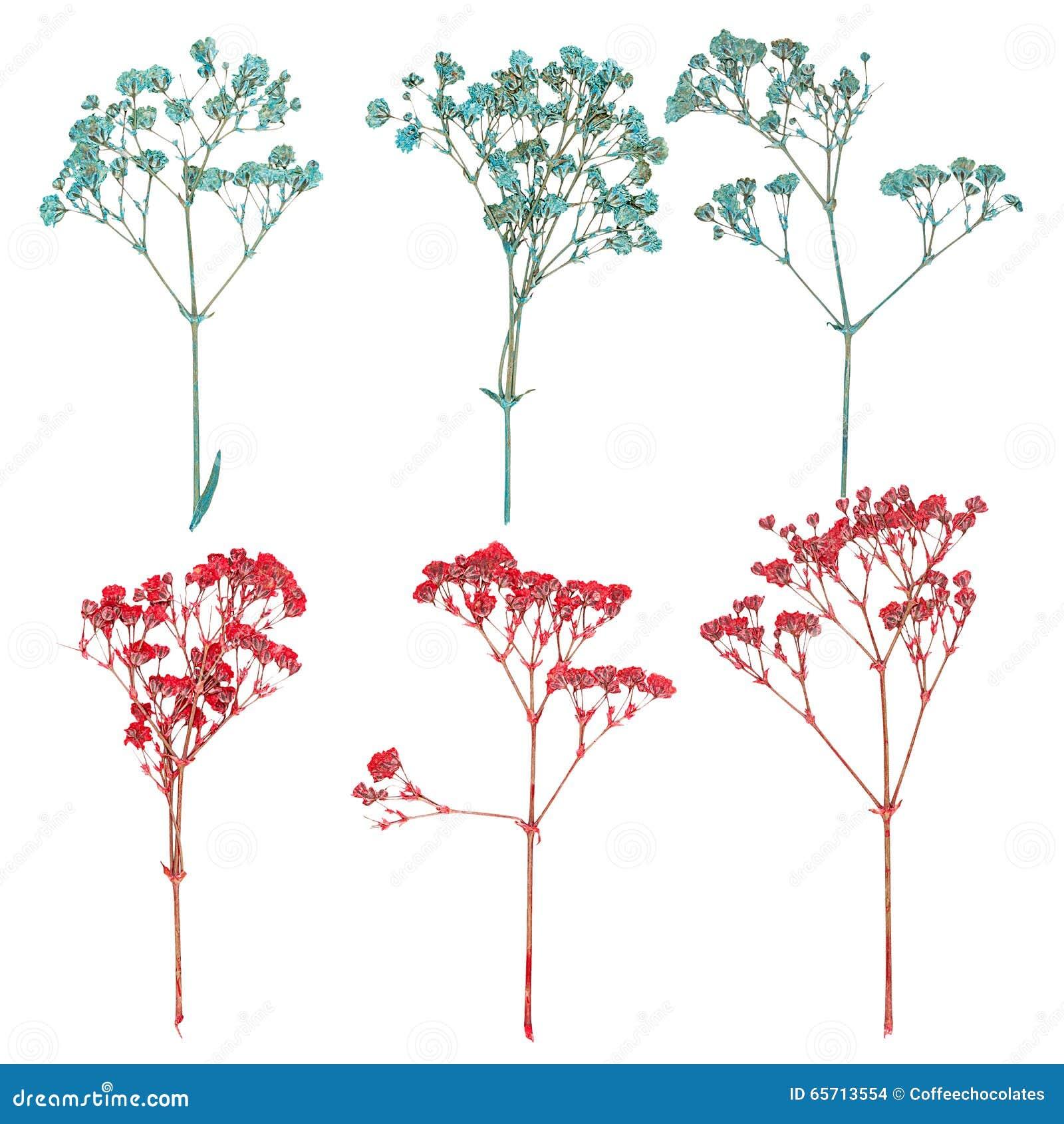 gepresste blumen aufkleben herbarium anlegen u tipps u techniken zum trocknen der blumen. Black Bedroom Furniture Sets. Home Design Ideas