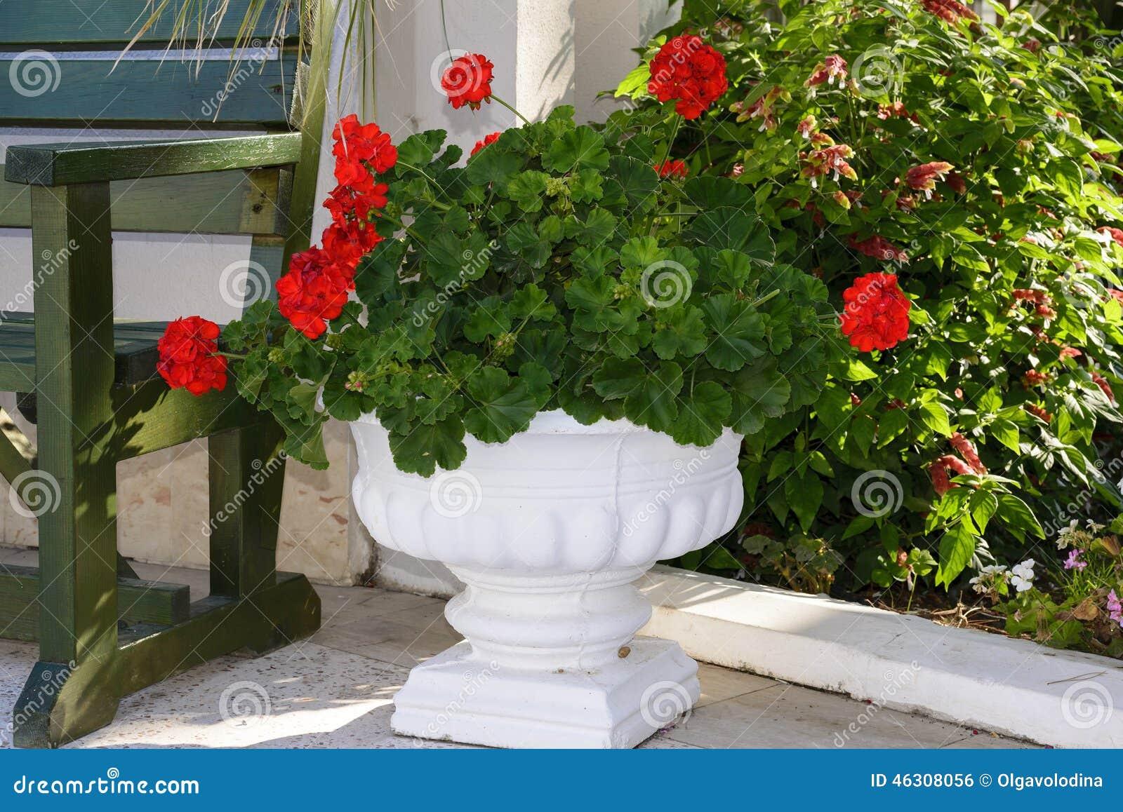 Gerani rossi in vasi al giardino fotografia stock - Vasi in giardino ...