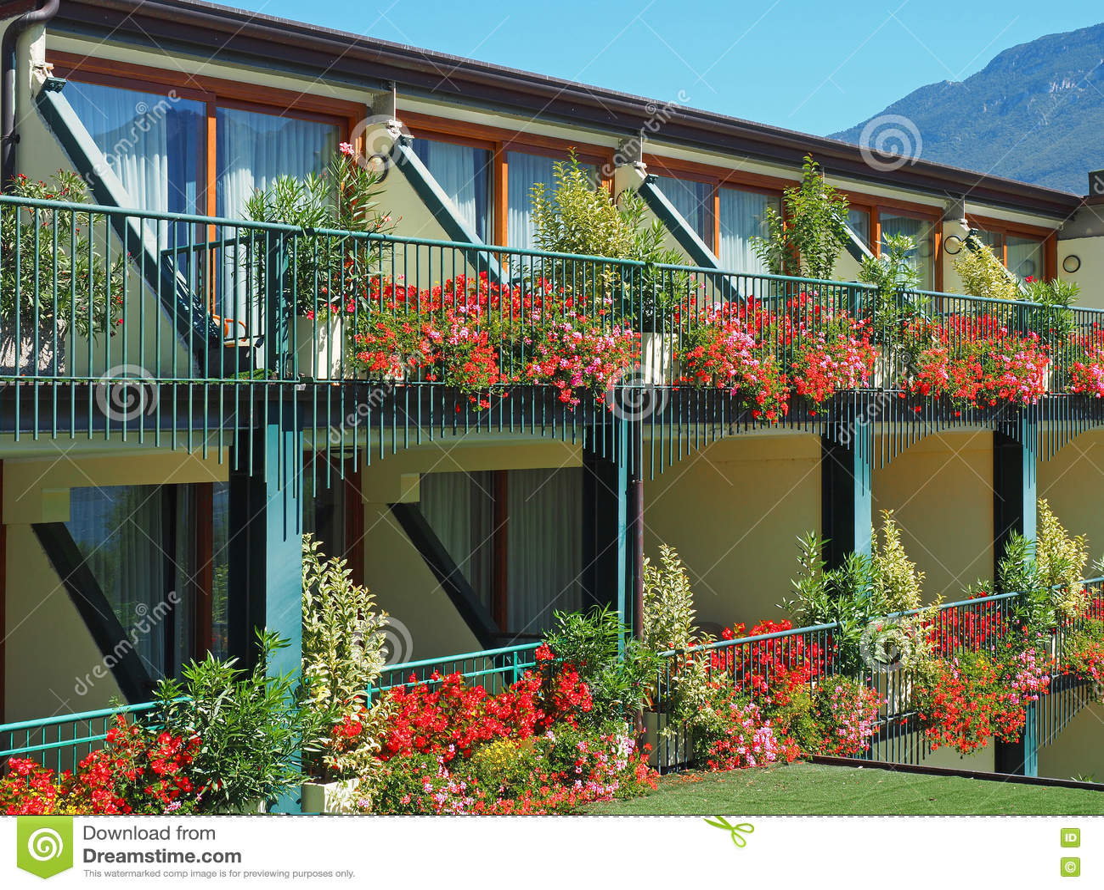 Geranio dei terrazzi dei balconi fotografia stock immagine di