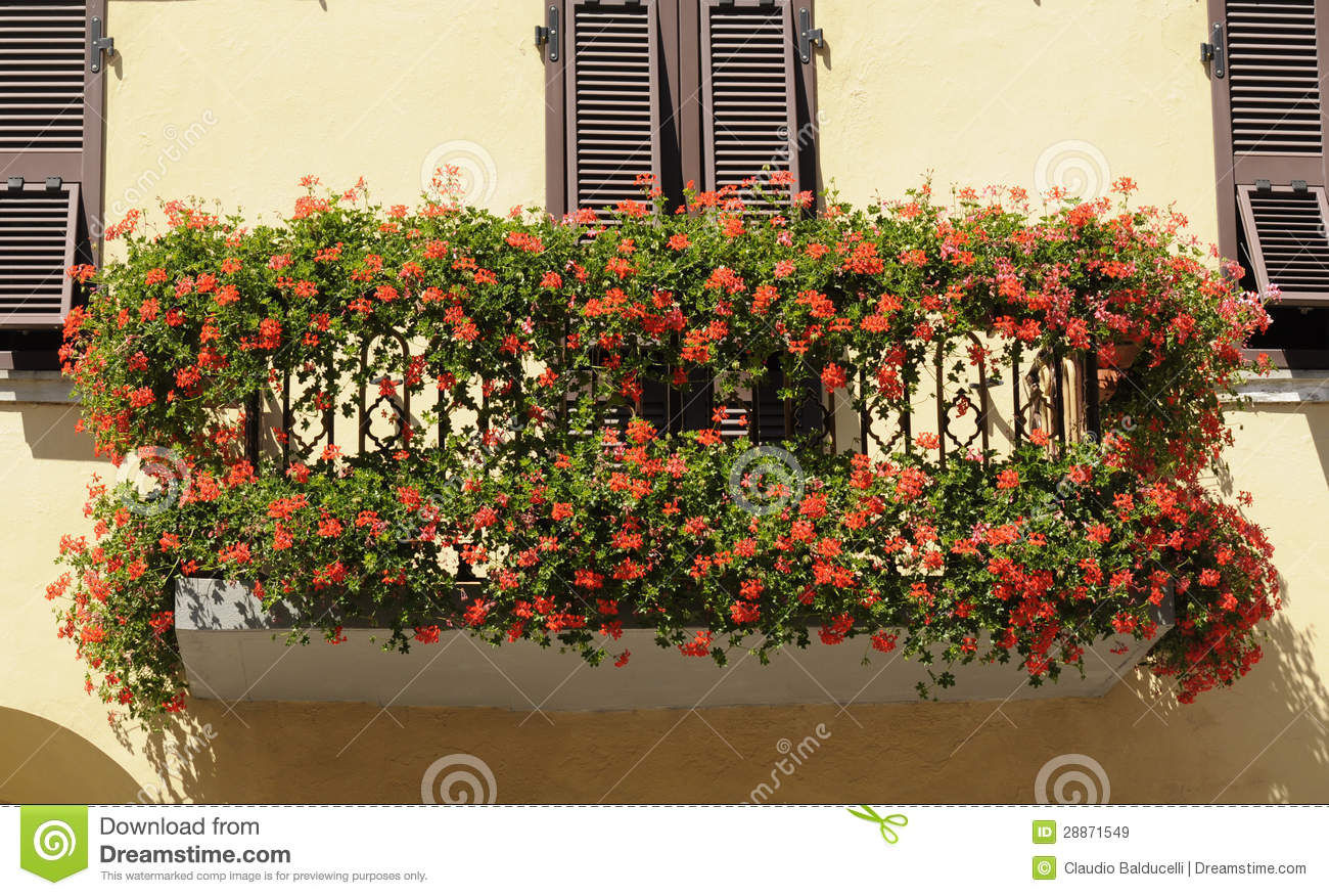 Geranium flowers adorn the balcony stock image image for Balcony flowers