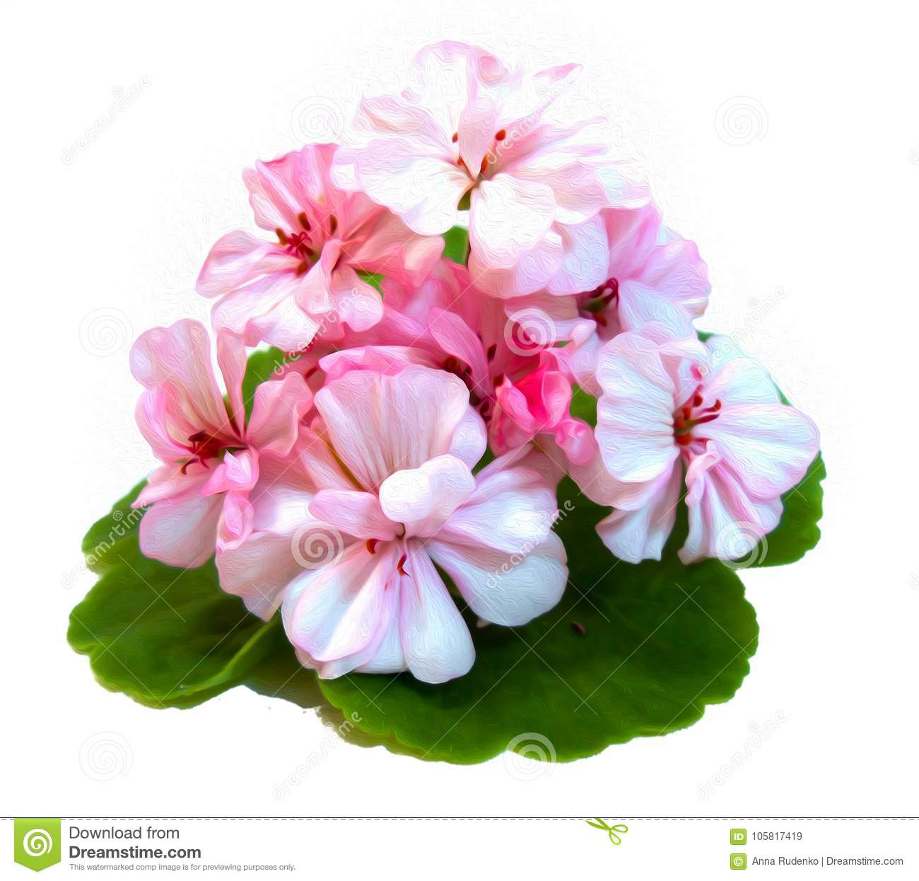 Geranium flowers in the shape of roses fresh on the green leaf,