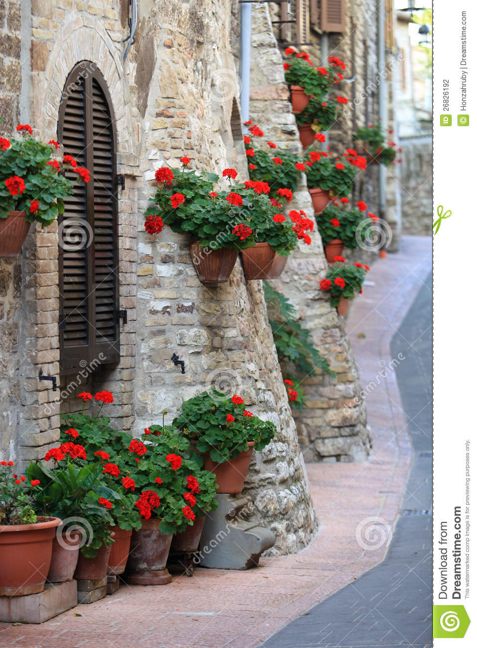 Geranium flowers in streets of Assisi, Umbria