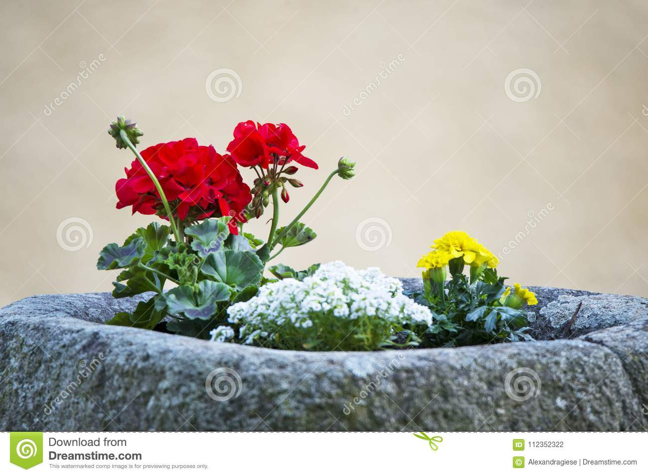 Geranium And Marigold Flowers Potted In A Stone Cost Stock Photo