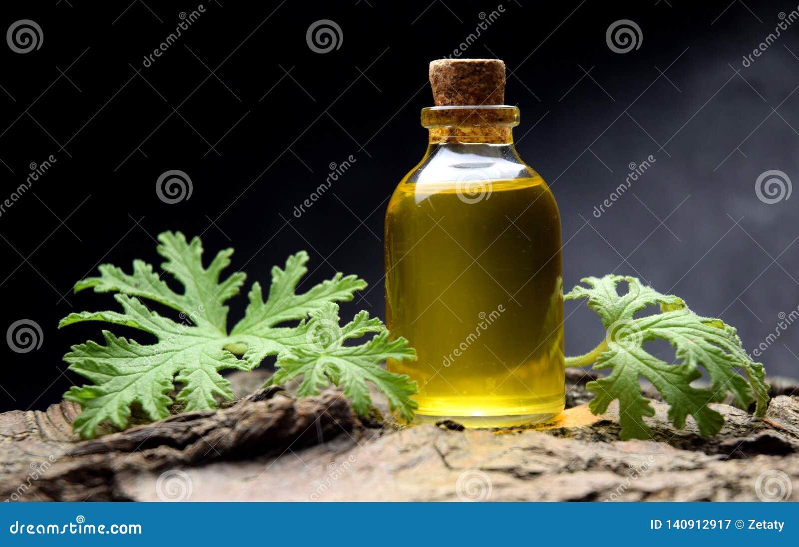 Geranium oil aromatherapy bio organic SPA