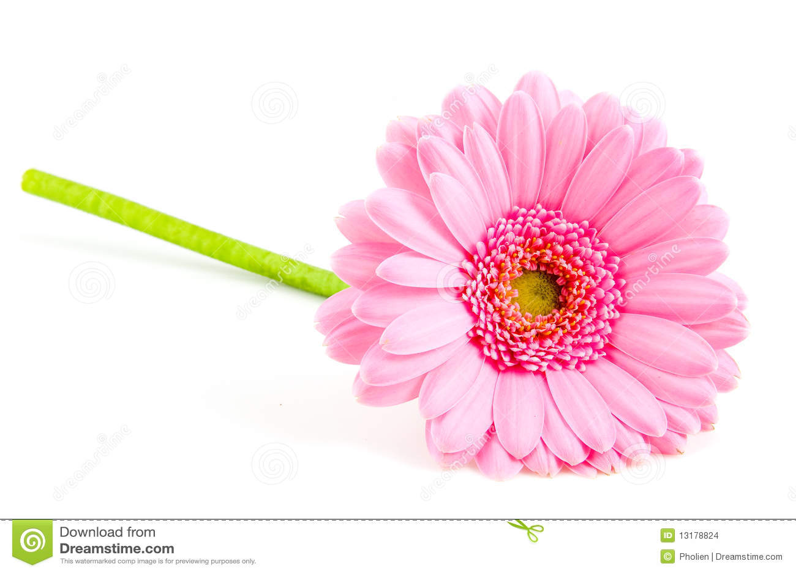 Gerber ροζ ενιαίο