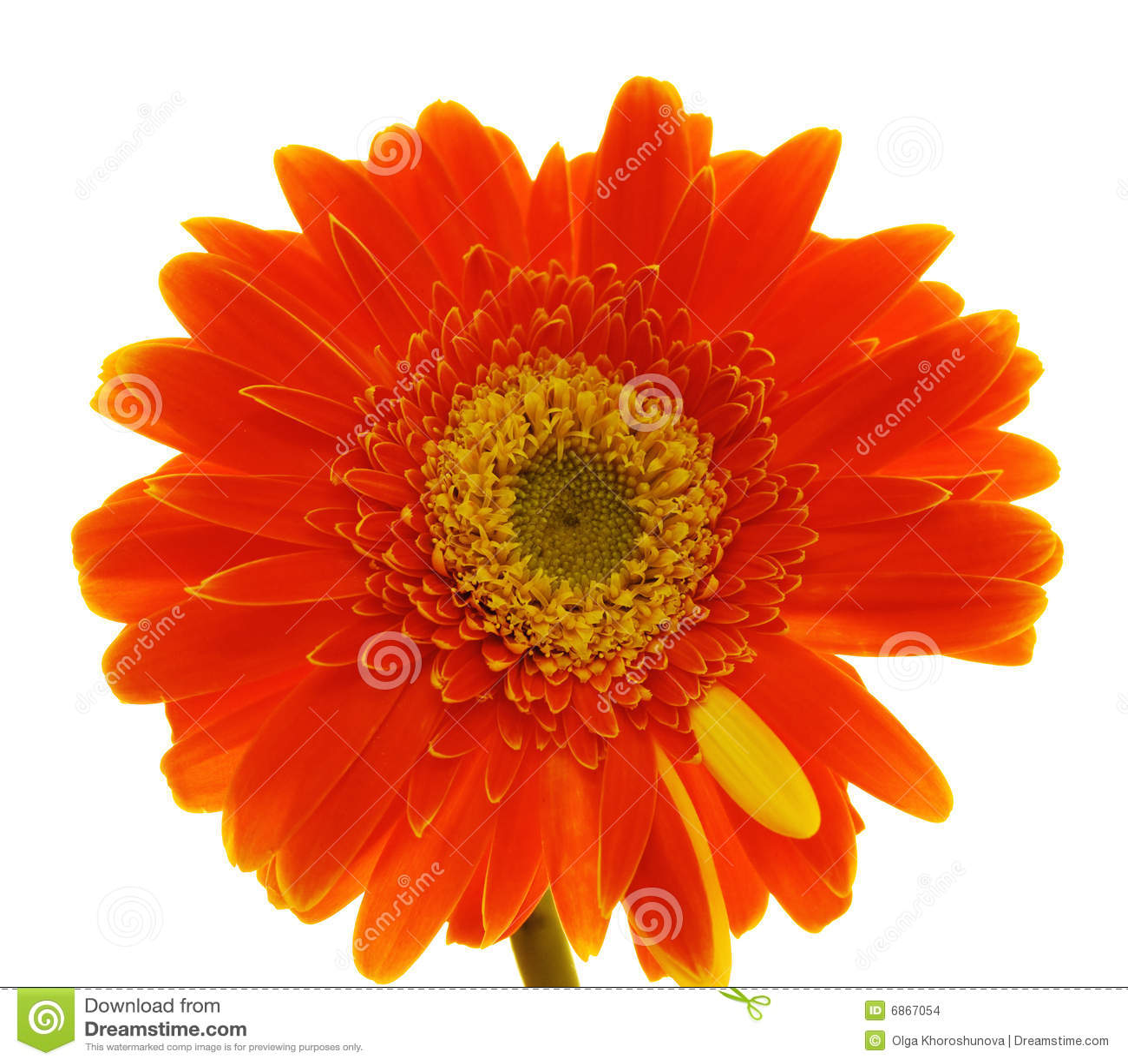 Gerber цветка