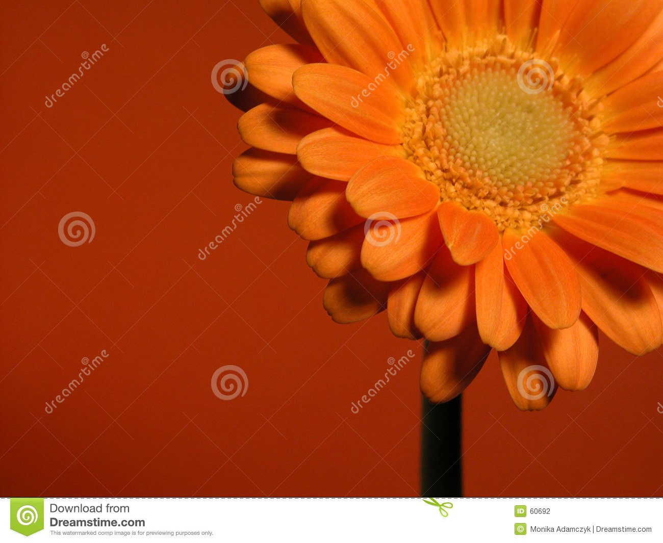 Download Gerber photo stock. Image du beauté, ressort, pétales, fleurs - 60692