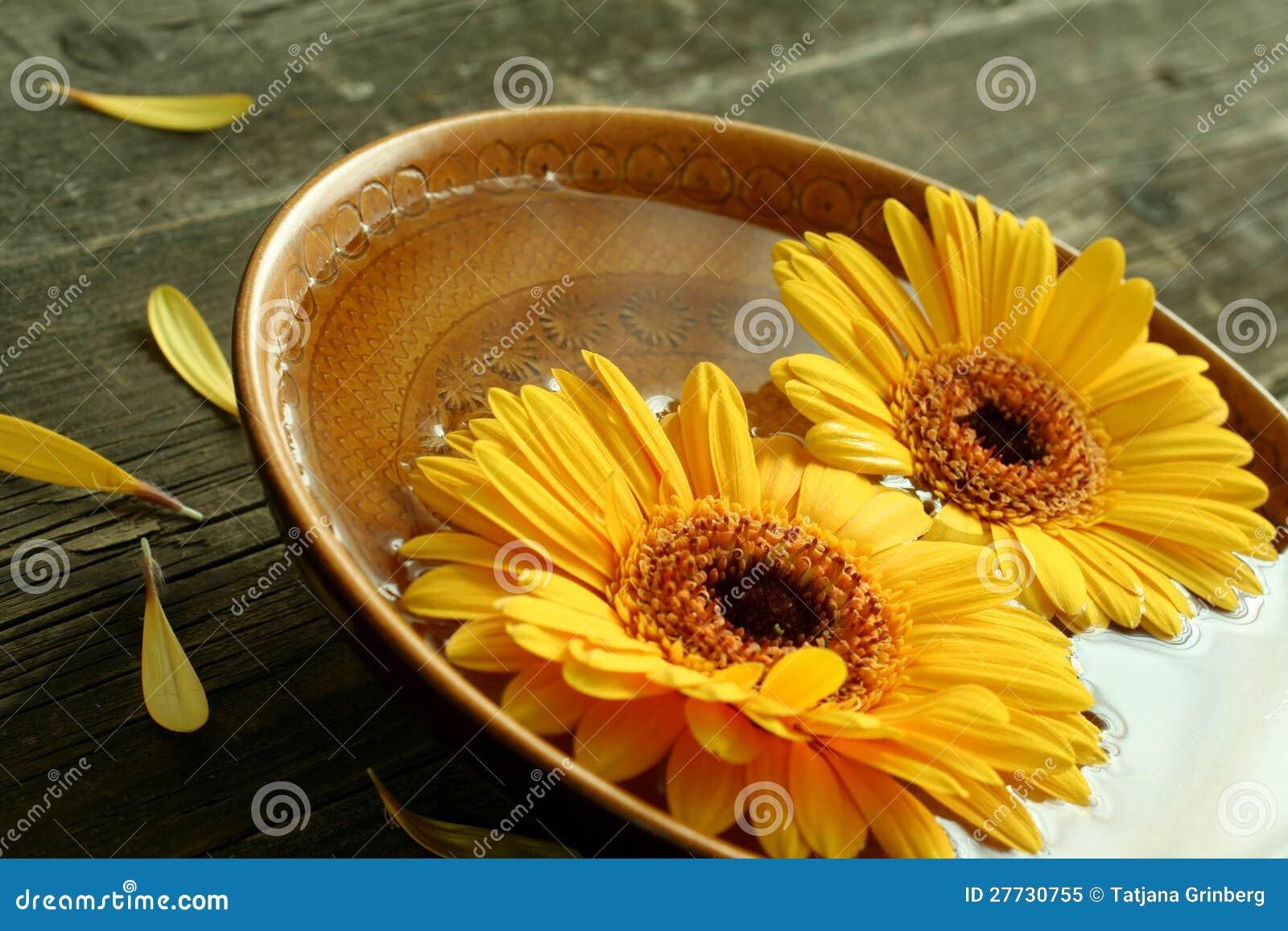 Gerber Blumen in der Schüssel auf altem hölzernem