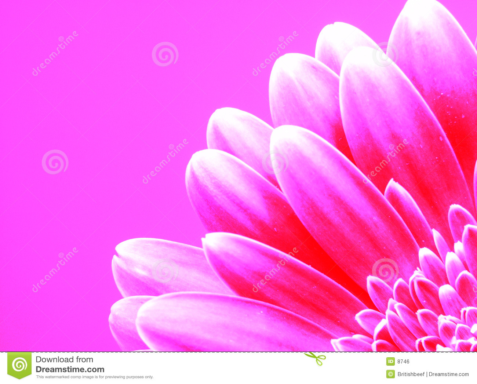 Gerber na cor-de-rosa