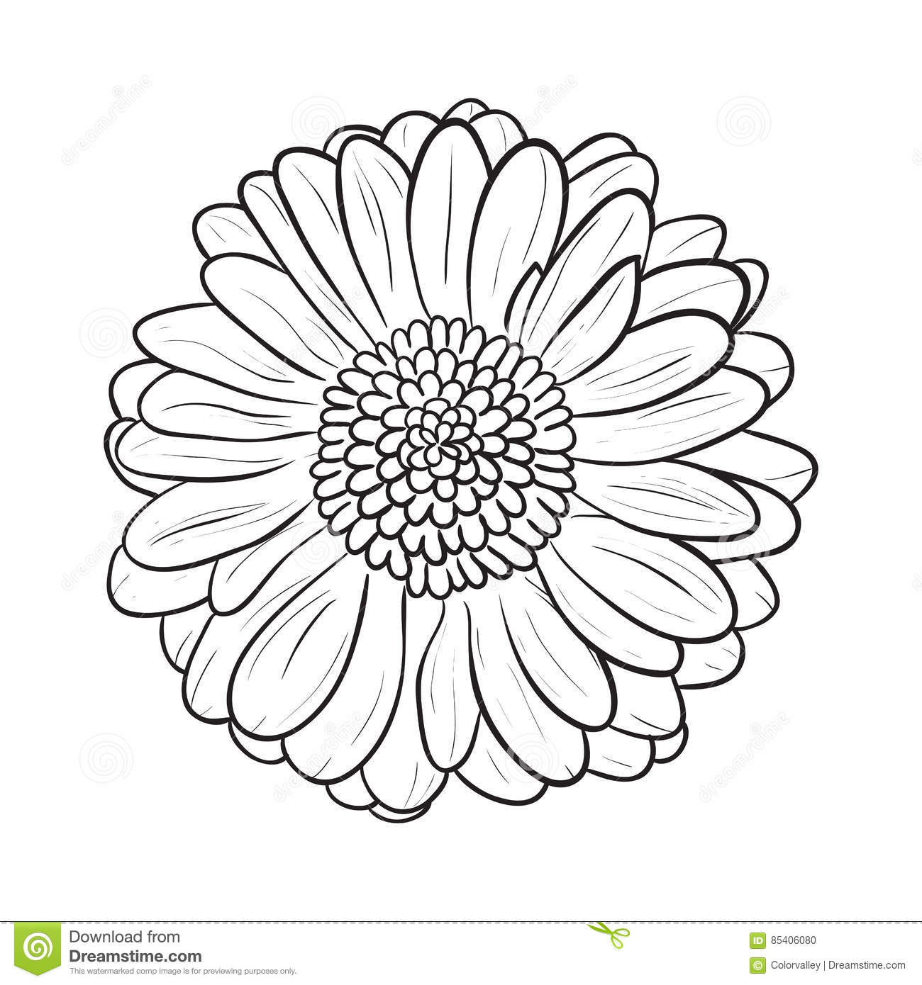Flower Petals Line Drawing : Gerbera chamomile icon vector line style stock