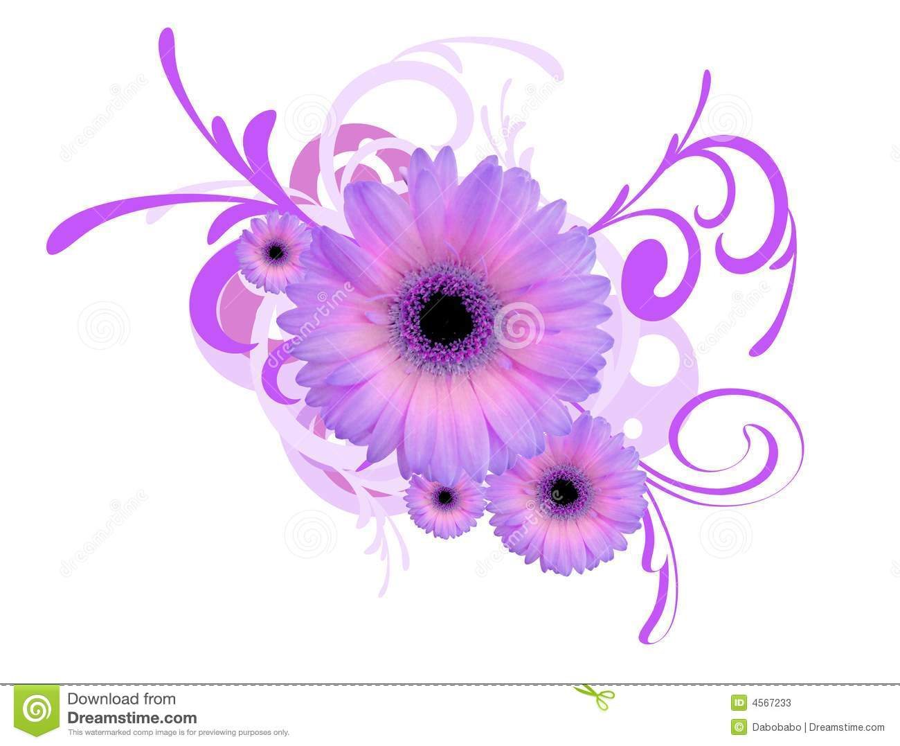 gerbera daisy background stock illustration illustration