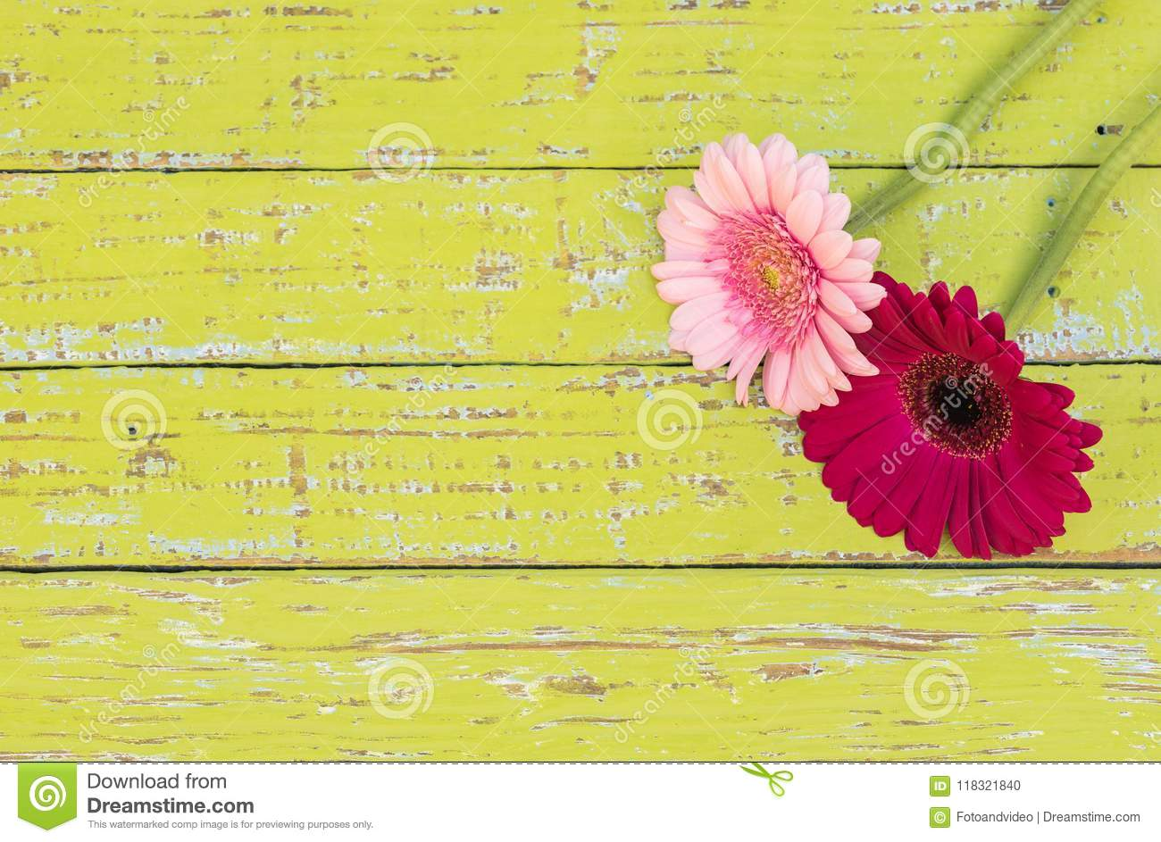 Gerbera daisy flower greeting card background for mothers or womans day at vintage style.