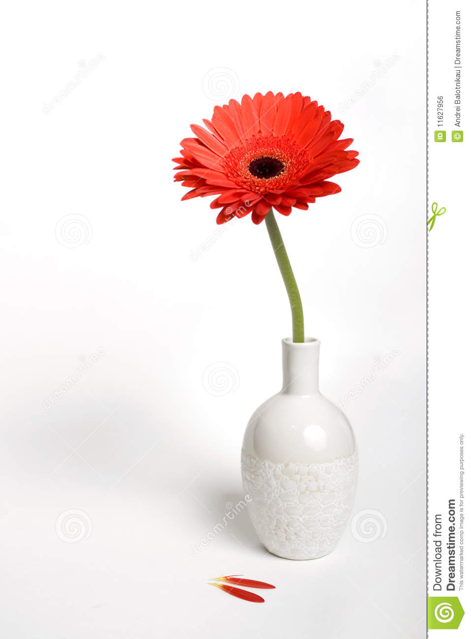 Gerbera Daisy In A Vase Stock Photo Image Of Tranquil 11627956