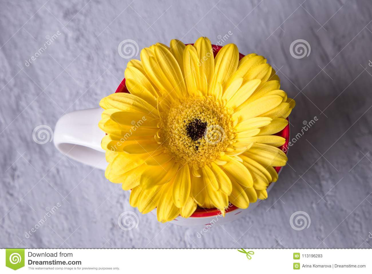 Gerbera daisy yellow flower im tea cup on grey background stock download gerbera daisy yellow flower im tea cup on grey background stock image image of mightylinksfo