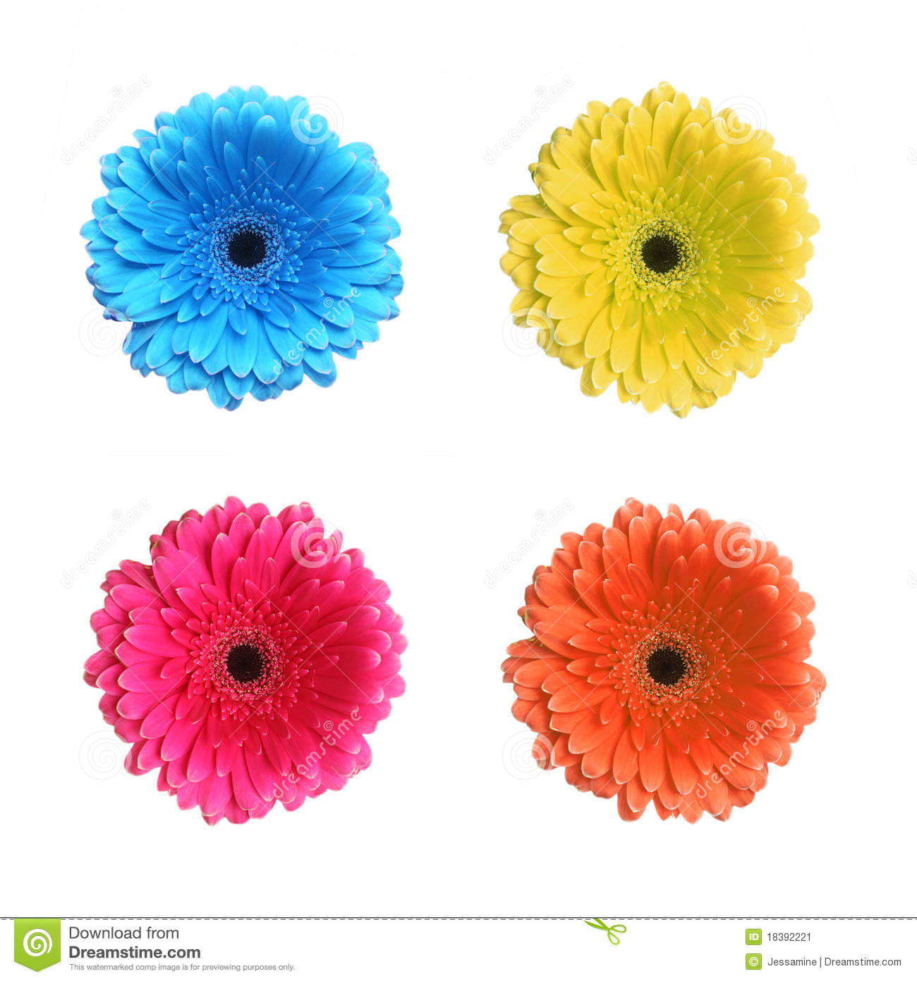 Gerbera flower in different colors stock image image for What makes flowers different colors