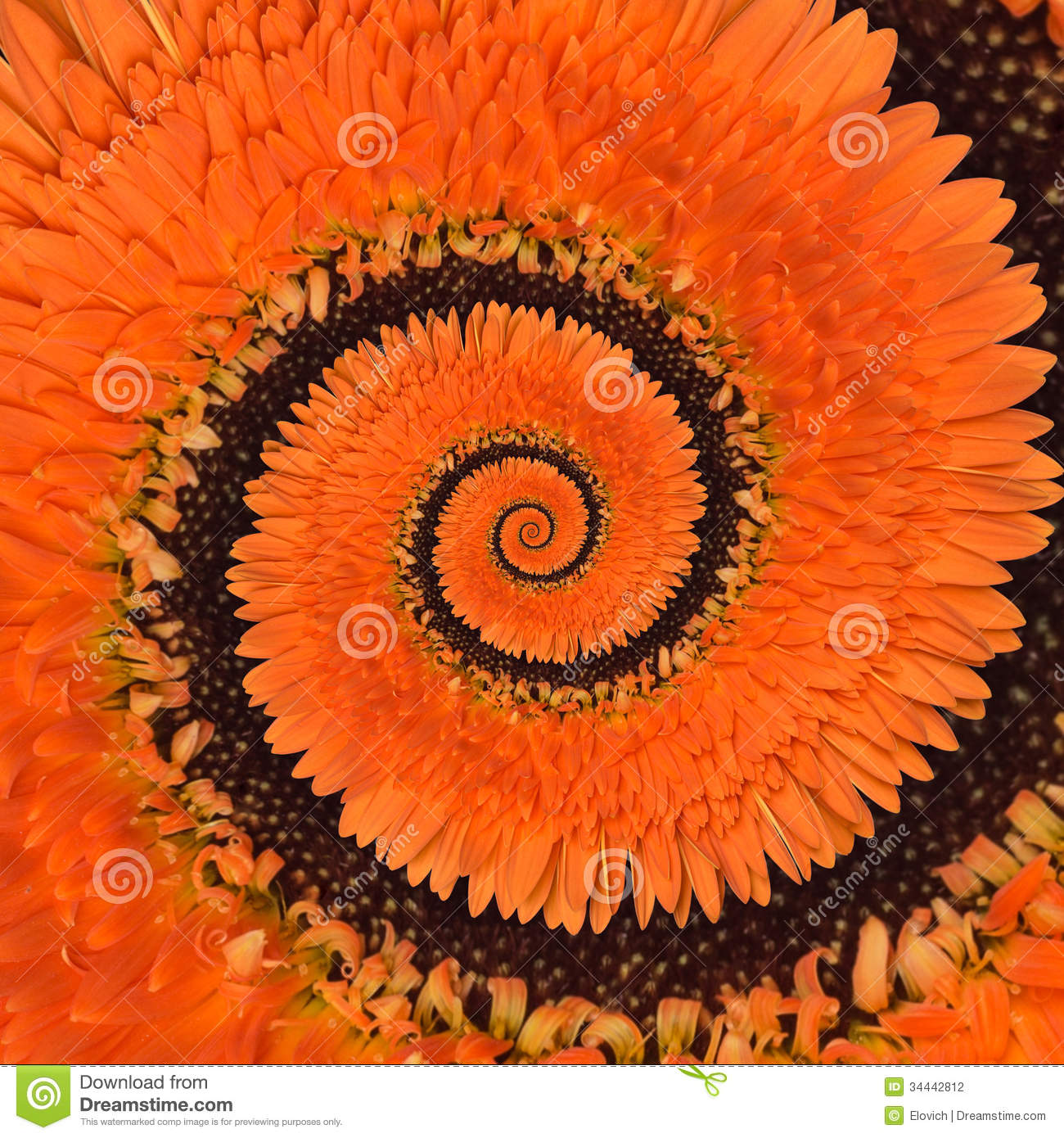 Gerbera flower infinity spiral abstract background