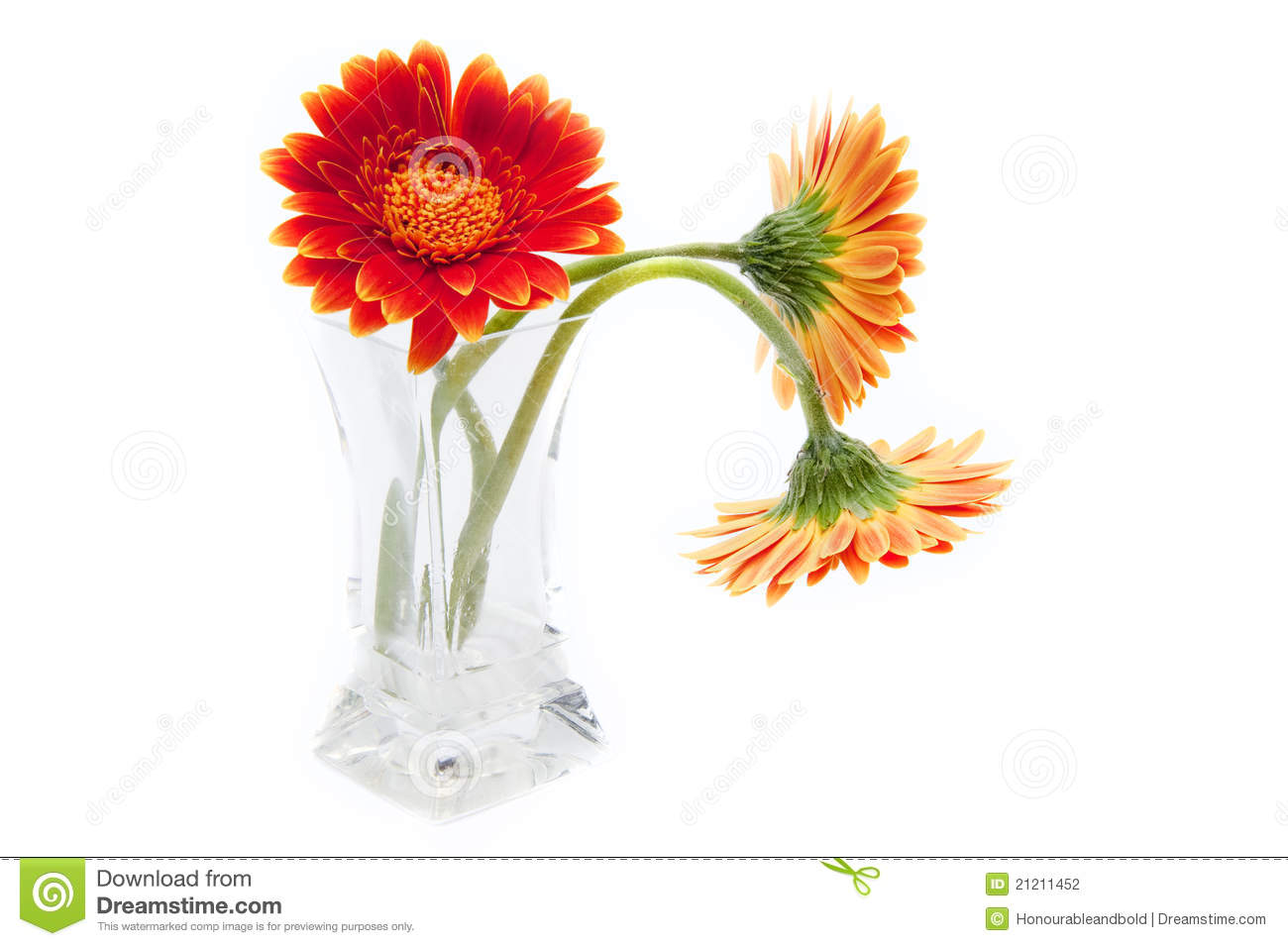 Gerbera Flowers In Glass Vase Isolated On White Stock Photography ...