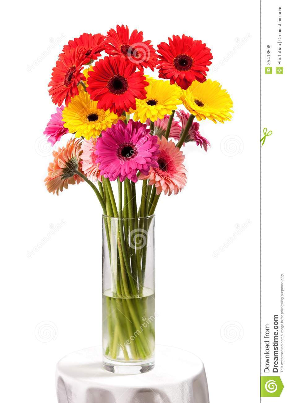 Gerbera Flowers In Vase Isolated Over White Royalty Free ...