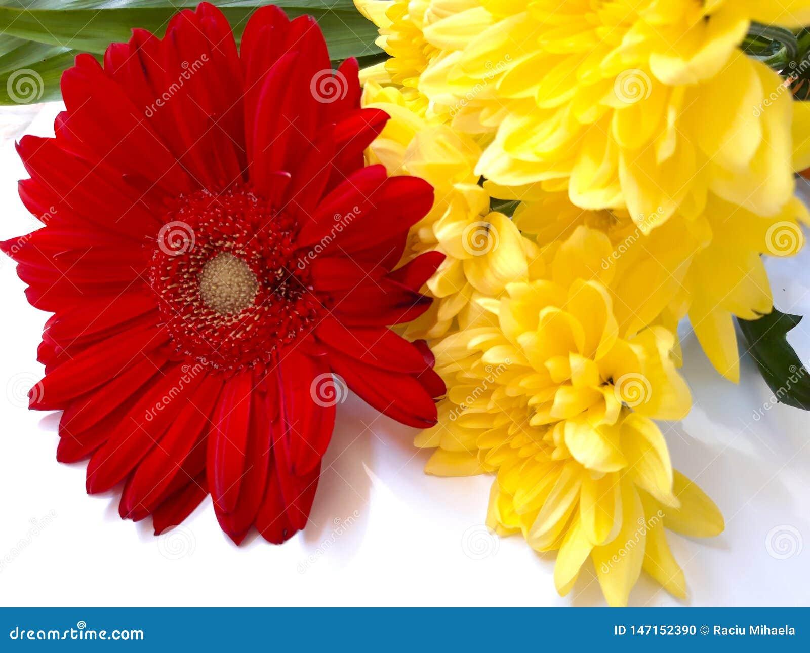 Gerbera- und Chrysanthemenblumen!