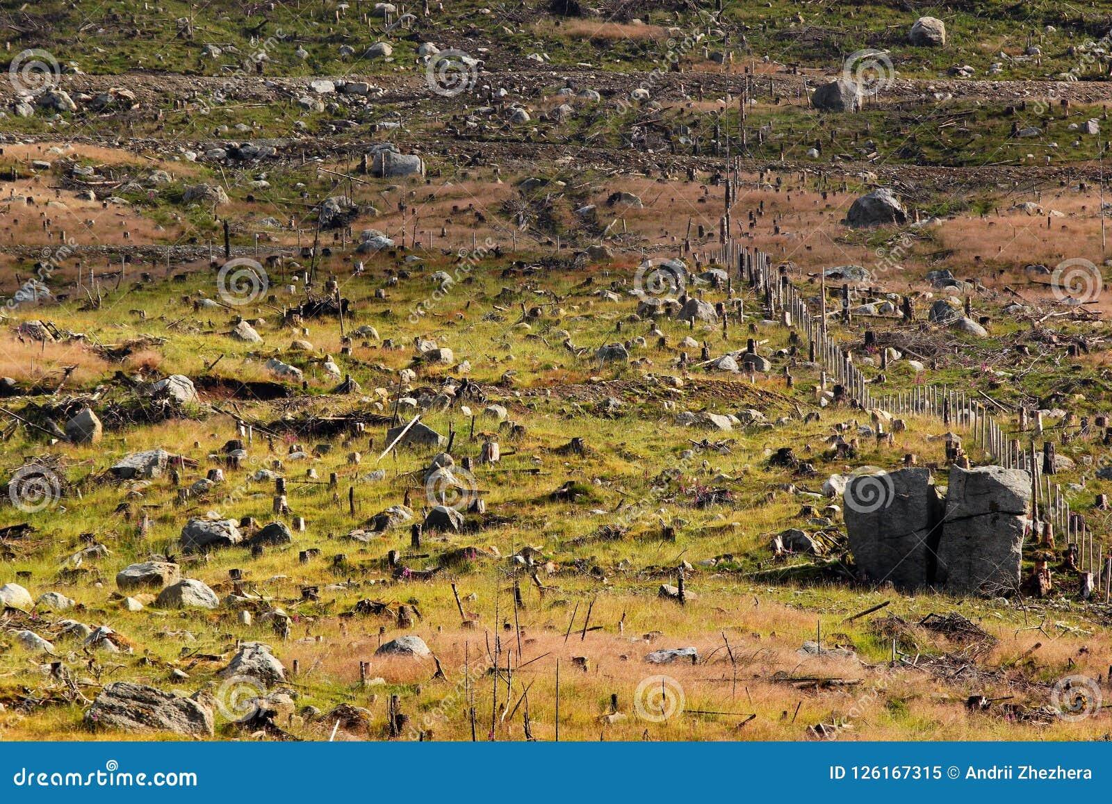 Geregistreerd bos, Noorwegen