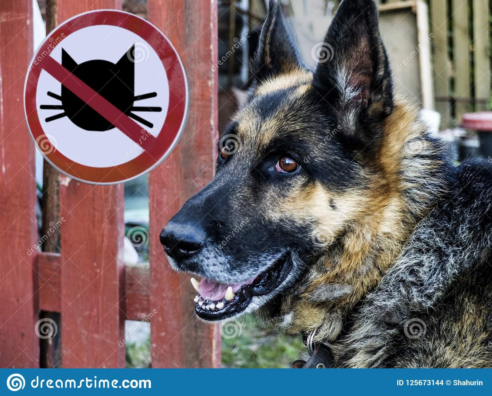 German shepherd on the background of the sign no entry cats.