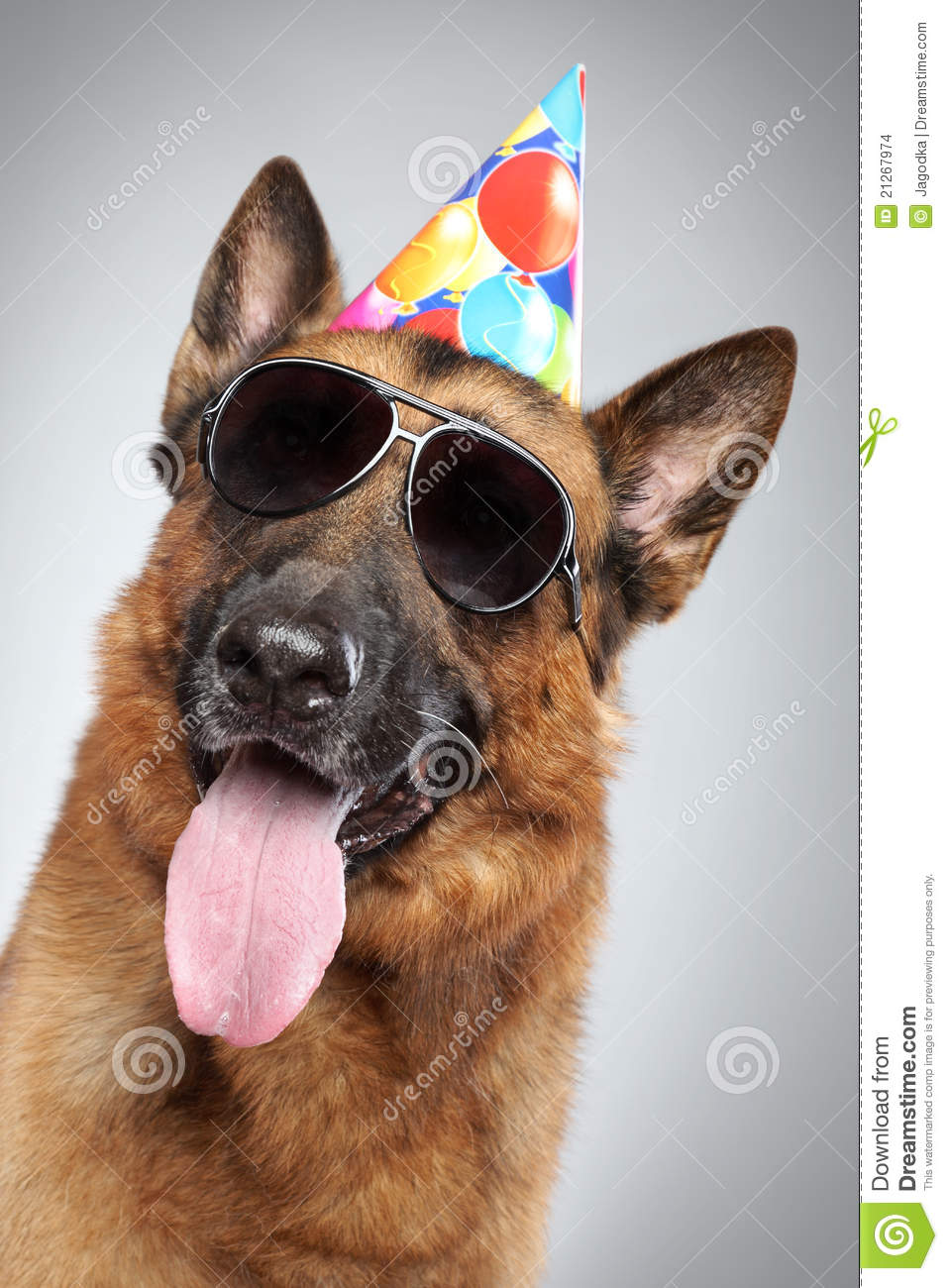 German Shepherd In Cone And Dark Sunglasses Stock Images - Image ...