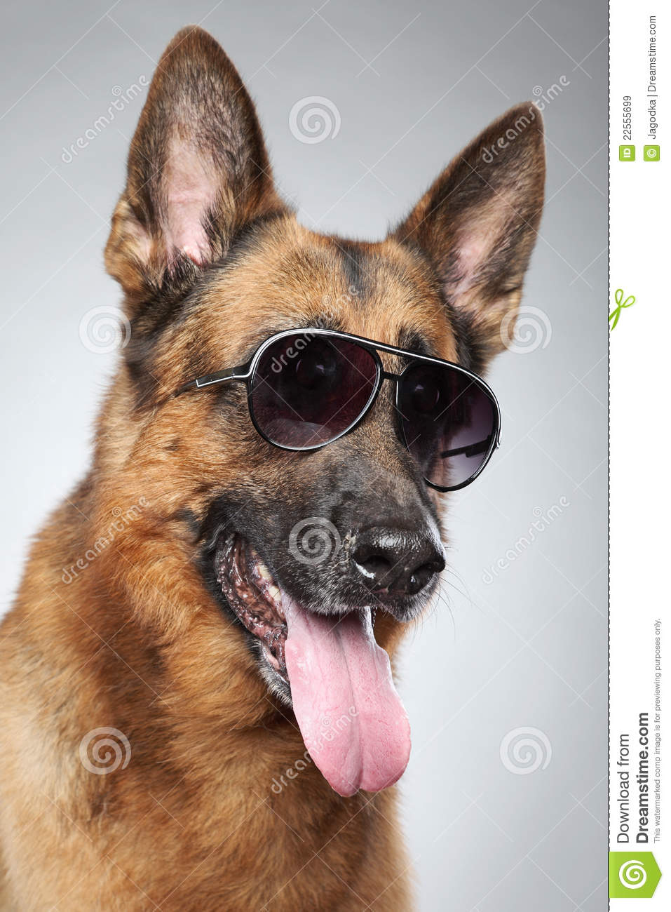 Big Dog Sunglasses