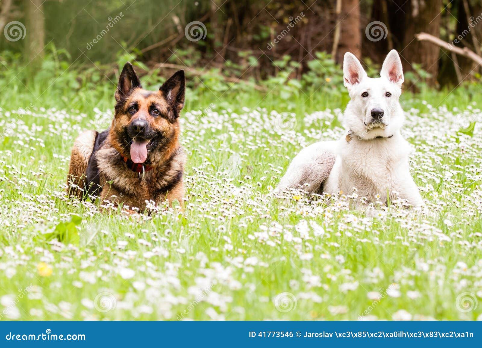 Daisy S Dog Dreams