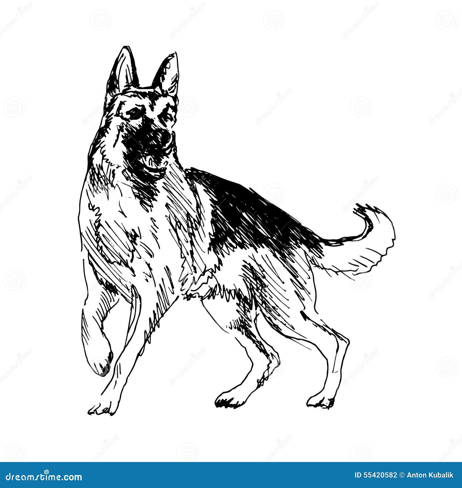 German Shepherd Stock Vector Illustration Of Copy German 55420582 - German-shepherd-drawings