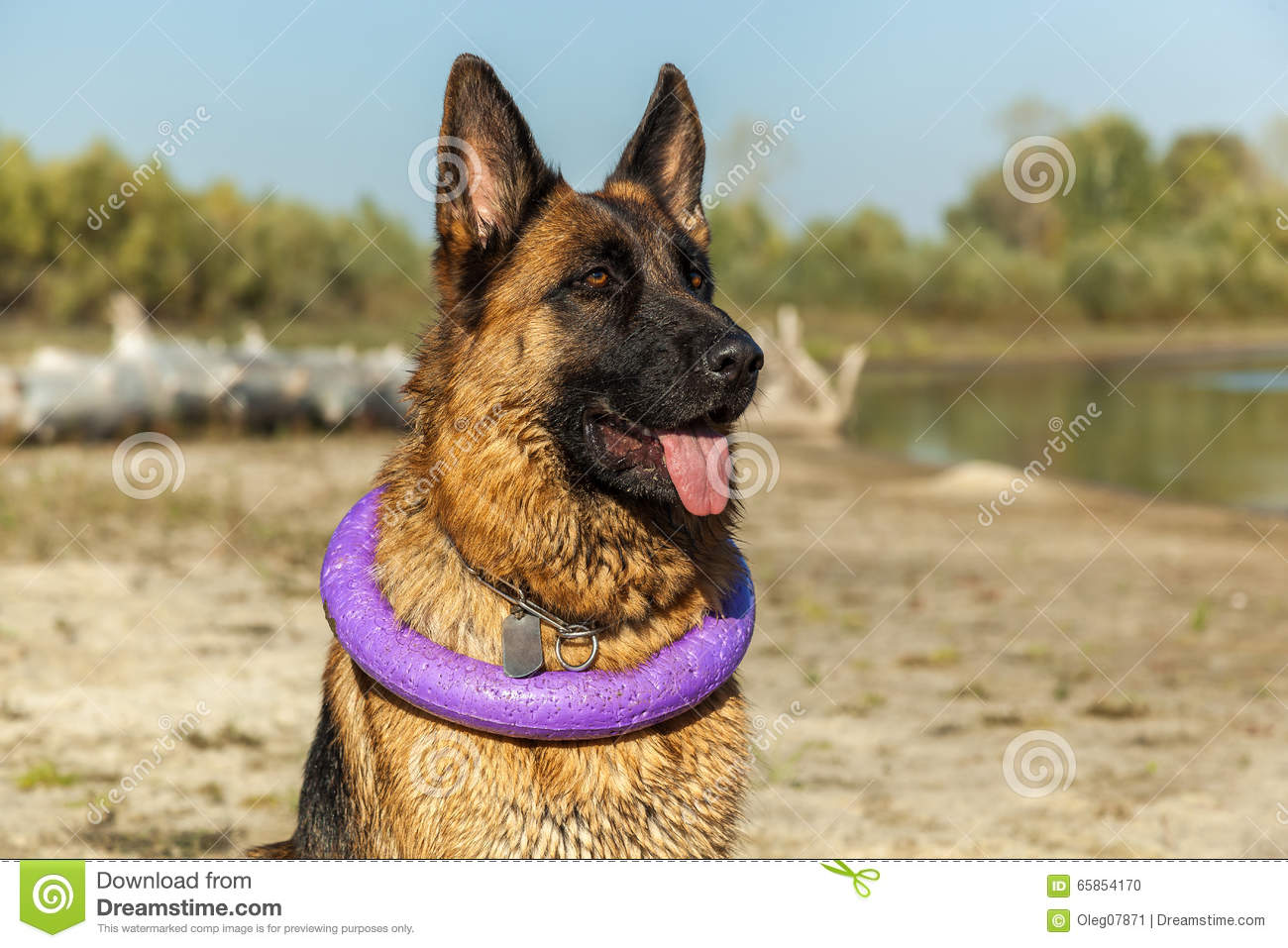 a dog is a man s best friend They are considered by many to be a man's best friend, but scientists say dogs are actually selfish creatures who will play with owners, but not help them researchers from the university of .