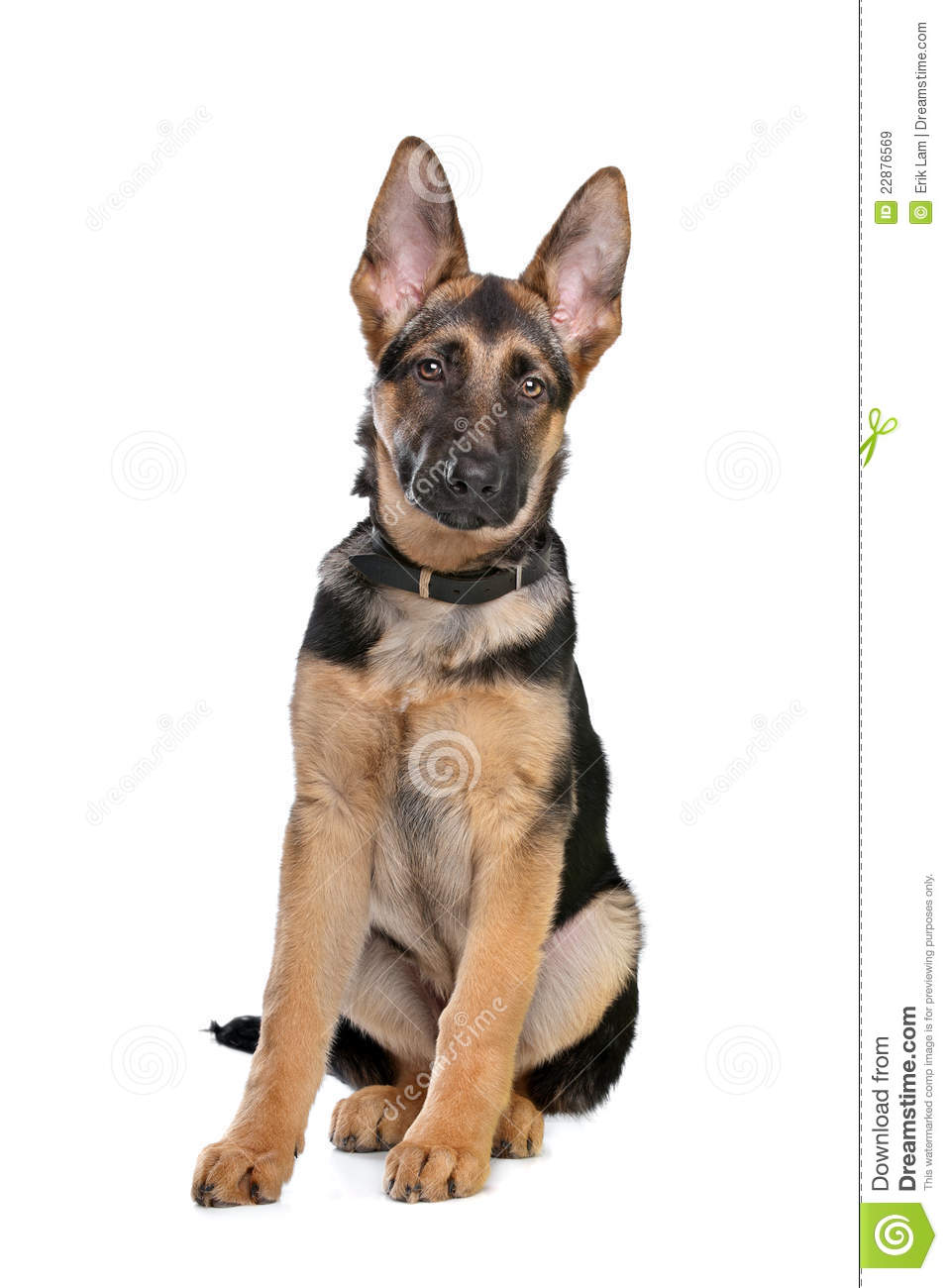 More similar stock images of ` German Shepherd puppy `