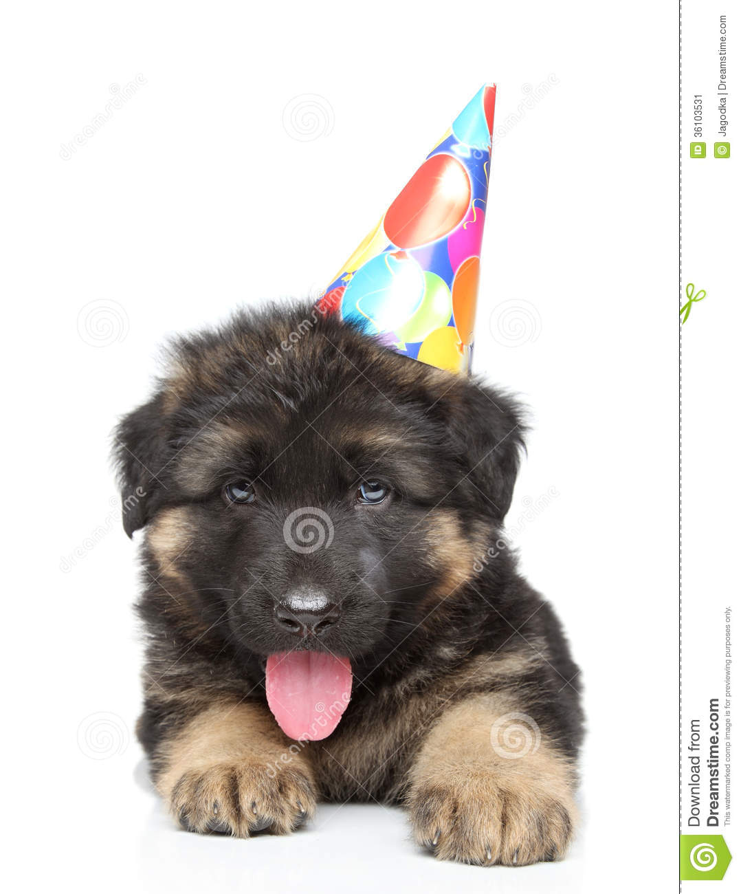 German Shepherd Puppy In Party Cone Stock Image Image Of Cute