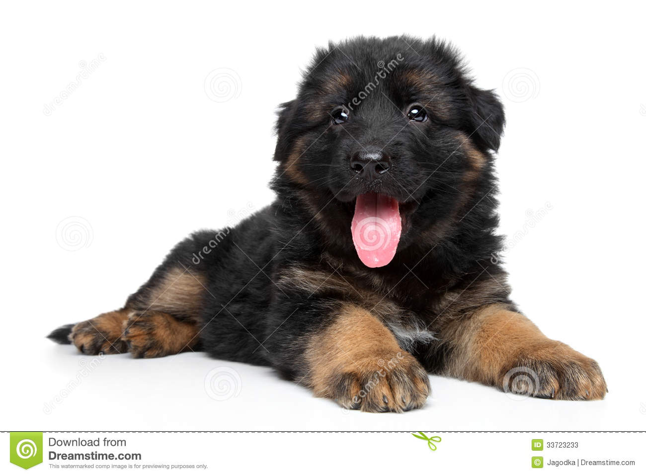 German Shepherd Puppy Stock Photos - Image: 33723233