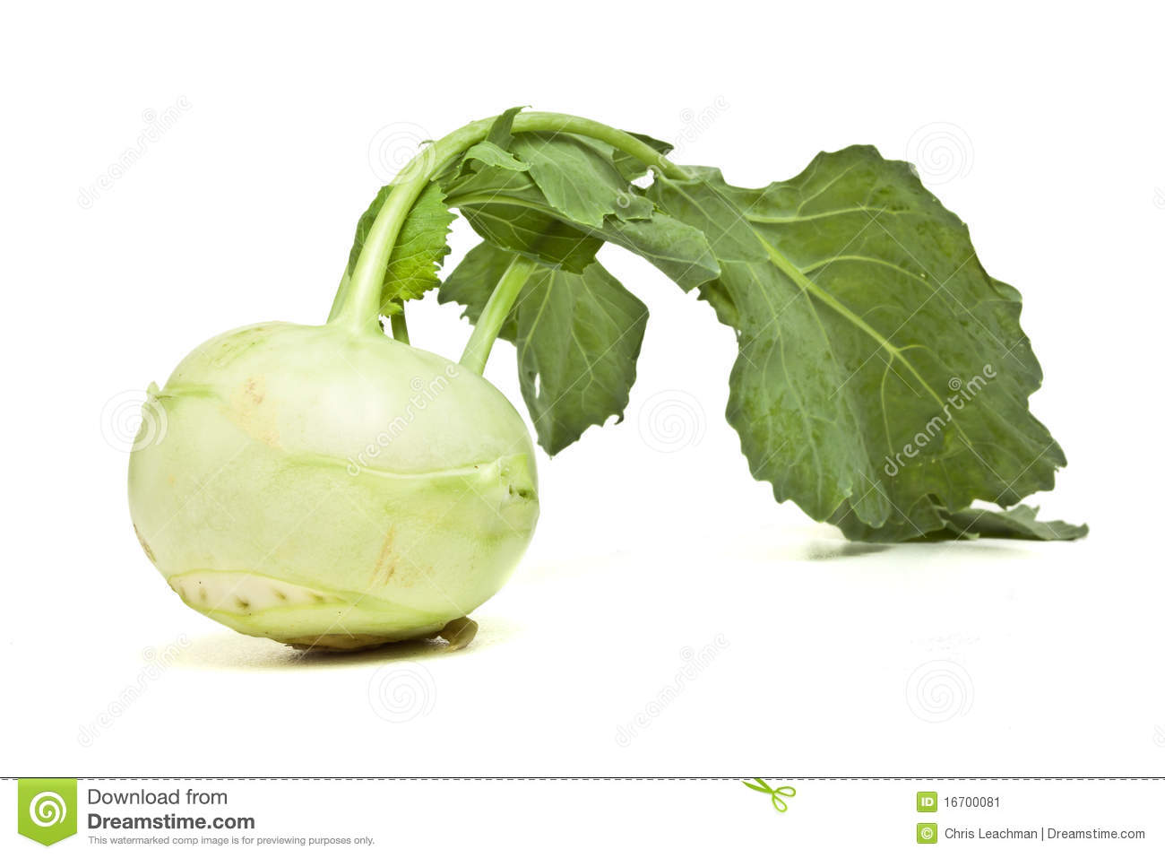 Vegetable garden - Vegetable Food Garden Cabbage Background Kohlrabi Agriculture Up Green