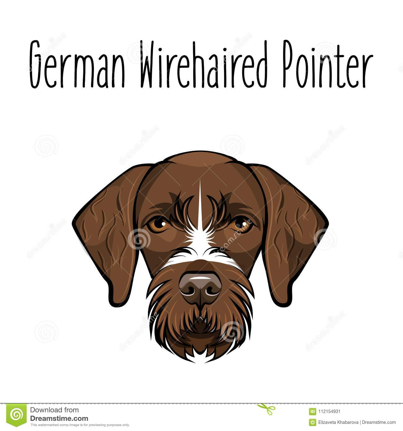 German Wirehaired Pointer. Dog Breed. Brown Face Of Hunting Dog ...