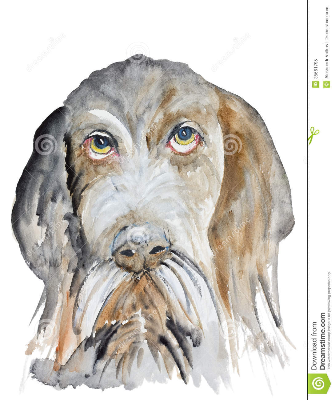 German Wirehaired Pointer stock illustration. Illustration of animal ...