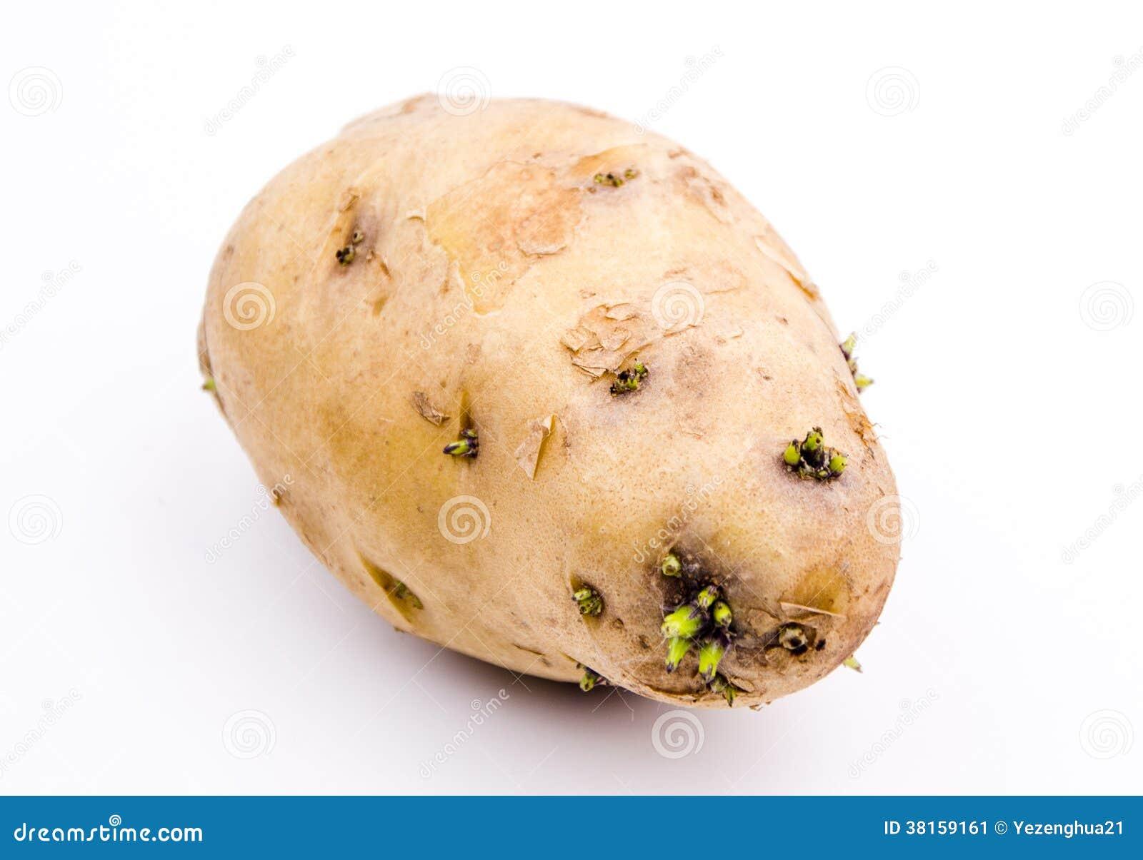 Germinación de patatas