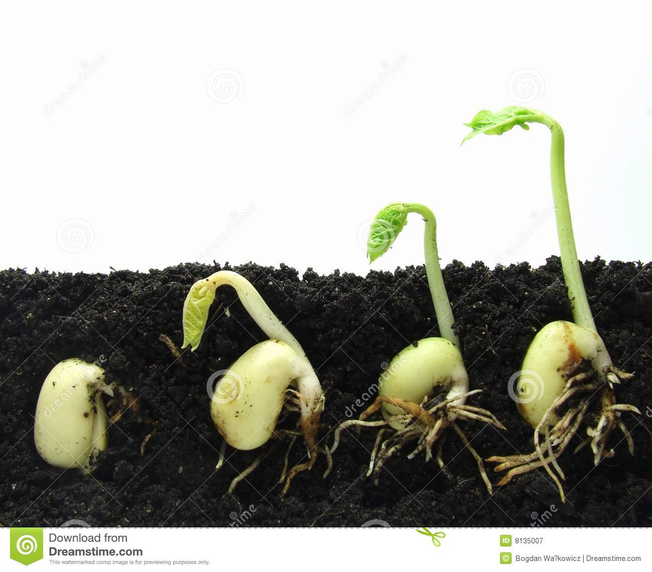 Germinating Plants Royalty Free Stock Photography - Image: 8135007