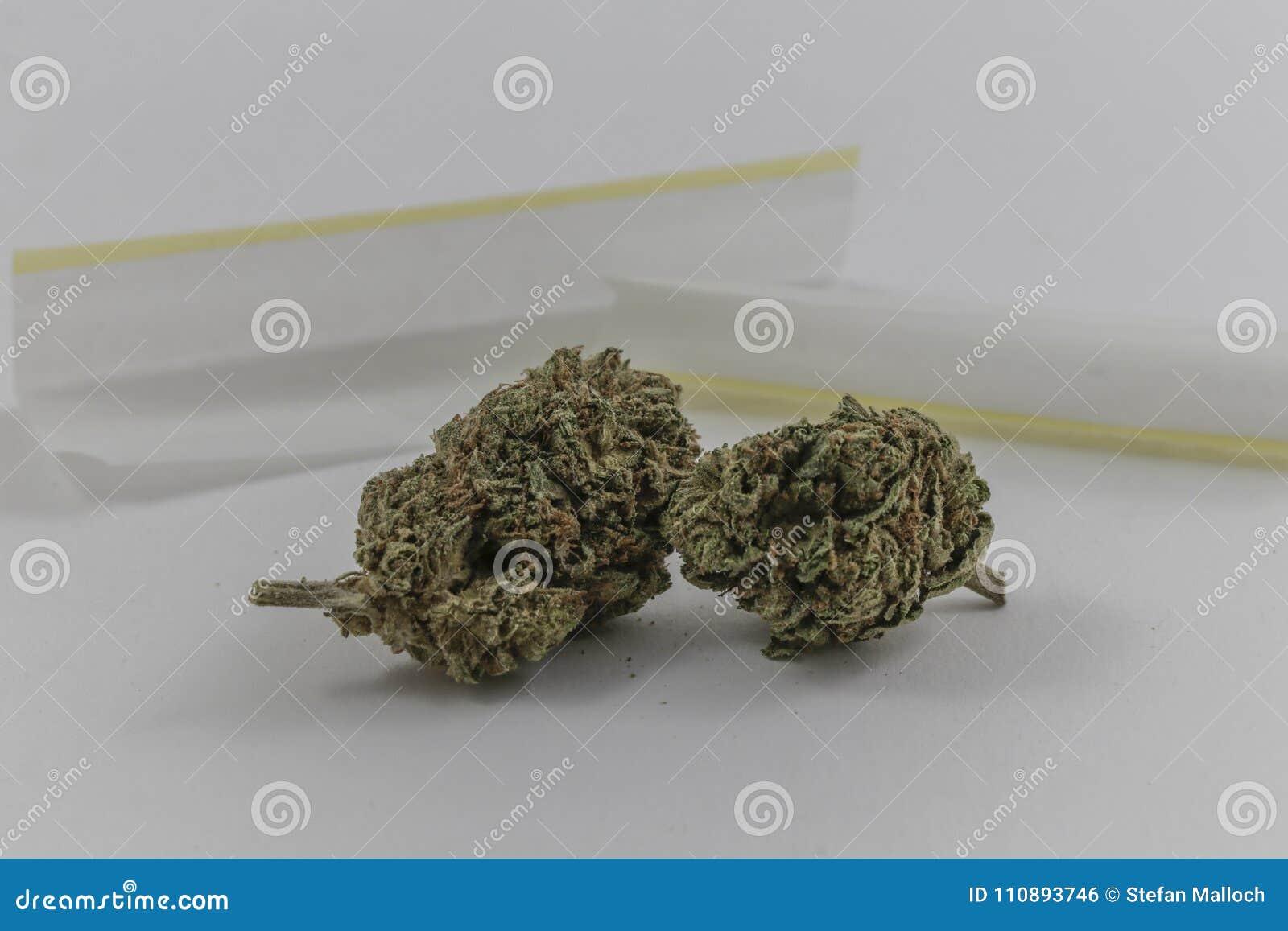 Germogli della marijuana con le carte di rotolamento