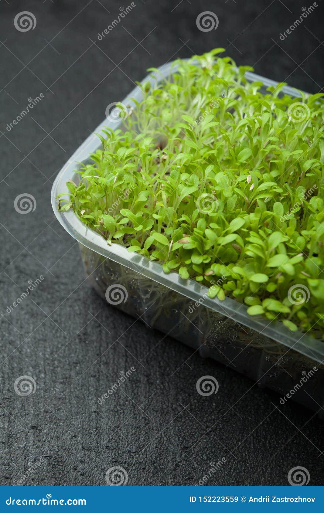 Germogli freschi di micro verde per una dieta di forma fisica