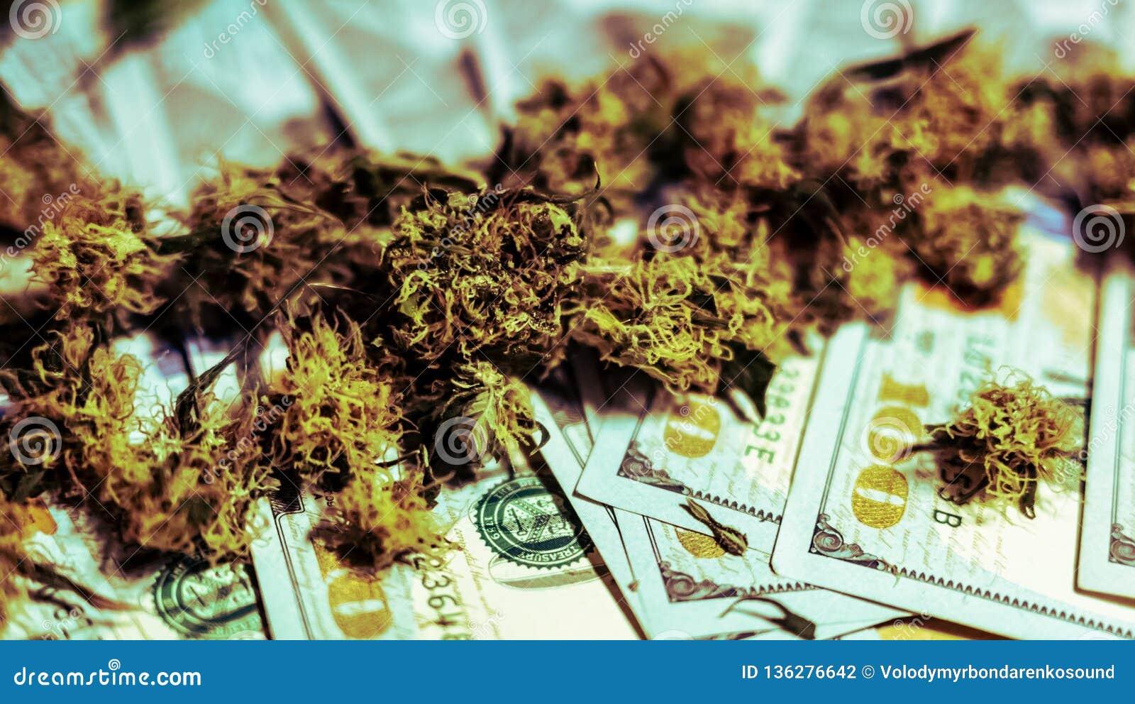 Germogli medici della marijuana che si trovano sui soldi, primo piano Cannabis crescente dell interno organico